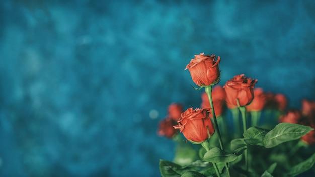 Copyspaceと赤いバラの背景 Premium写真