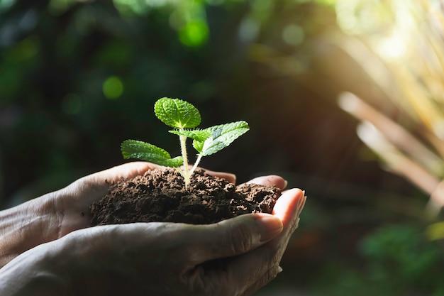 Человеческие руки, держа зеленый небольшой завод с copyspace. жизнь и экология. Premium Фотографии