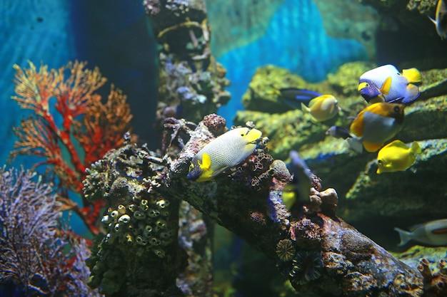 Coral and fishes in aquarium tank Premium Photo