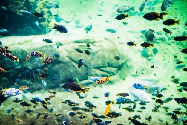 Coral fishes underwater scene Free Photo