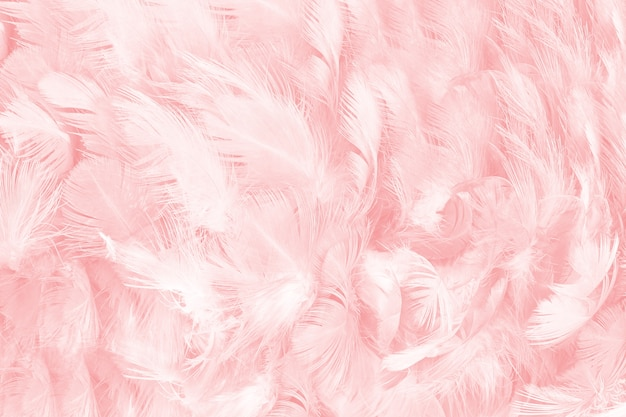 Coral Pink Feather Texture Background Photo