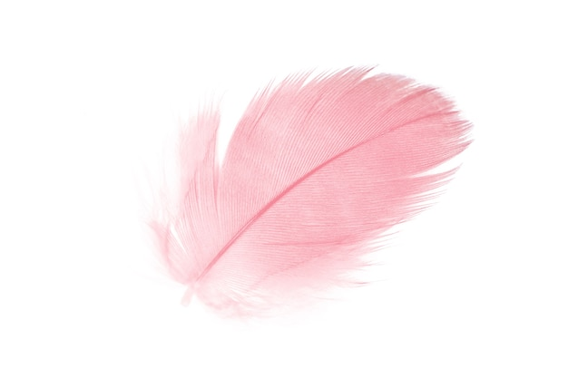 Coral pink feather on white background Premium Photo