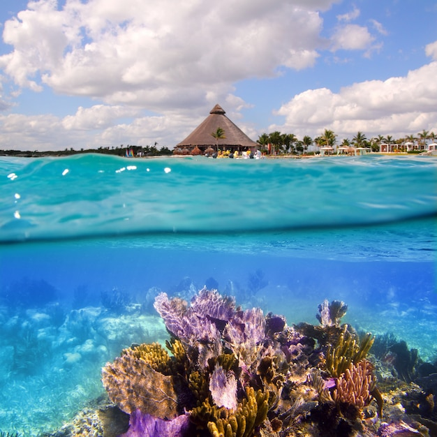 Coral reef in mayan riviera cancun mexico Premium Photo