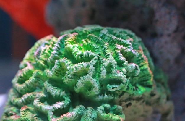 Corals in aquarium tank Premium Photo