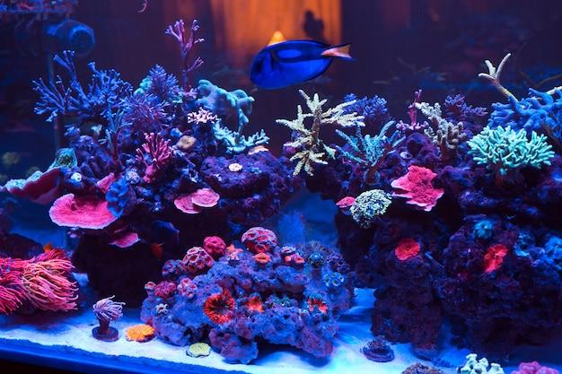 Corals in a marine aquarium. Premium Photo