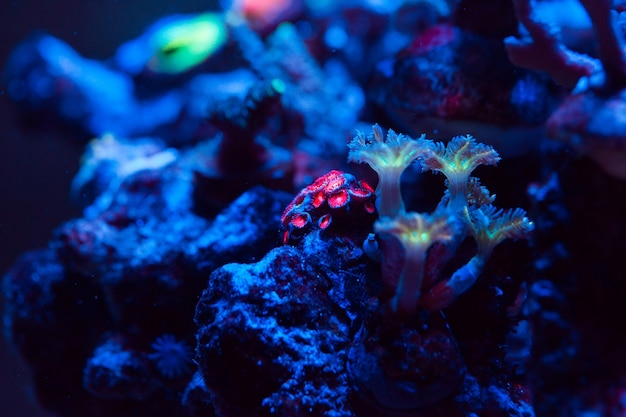 Corals in a marine aquarium. Premium Photo