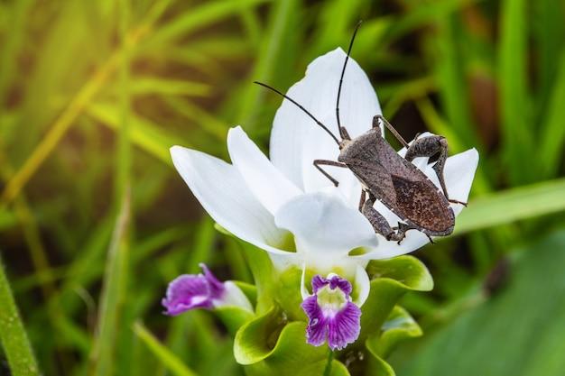 Coreid bug squash bug on the white flower photo premium download coreid bug squash bug on the white flower premium photo mightylinksfo