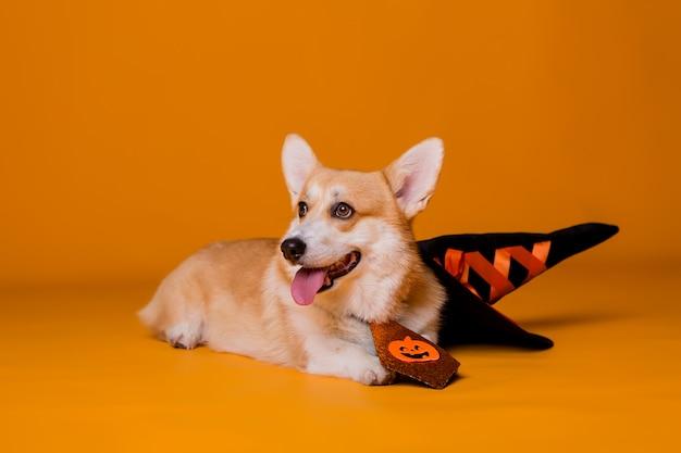 Corgi dog in halloween costume Premium Photo