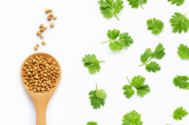 Coriander seeds with fresh leaves isolated on white Premium Photo