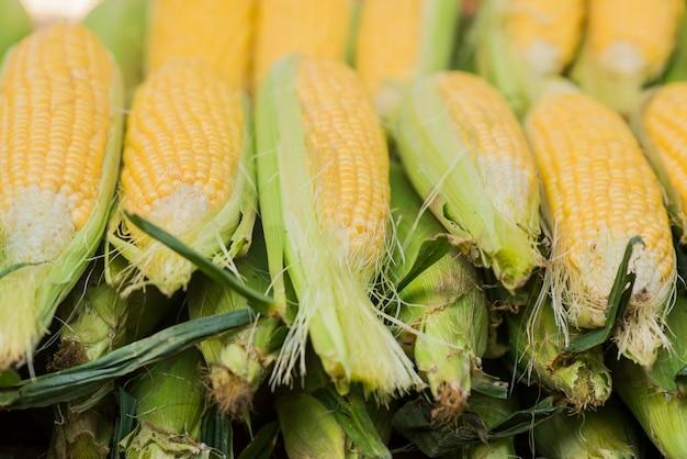 Corn cob between green leaves. fresh sweet corn in the farmers market. closeup of sweet boiled corn in market Free Photo