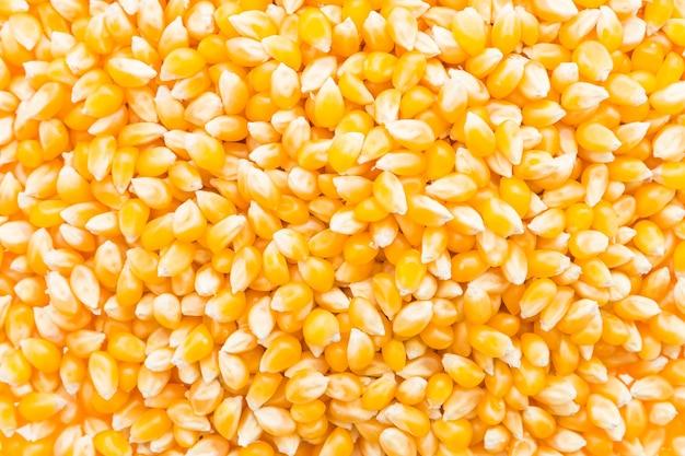 Corn cob seed Free Photo