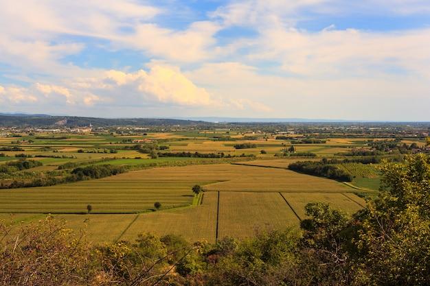 Cornfield Premium Photo
