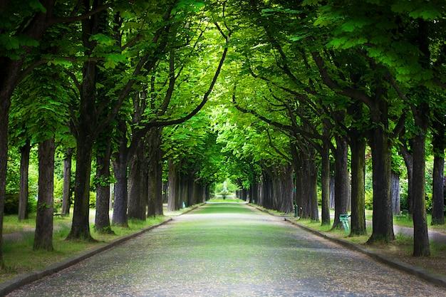 木の路地を通る田舎道 Premium写真