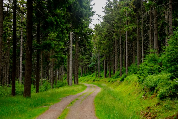 Country road in sudetes mountains, poland Premium Photo