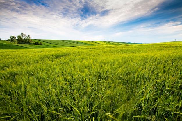 Campo di campagna, giornata di sole in campagna Foto Gratuite