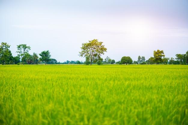 Countryside scenery of rice field Premium Photo