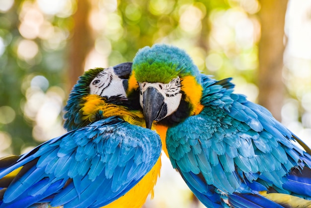 Couple birds on branch tree in the nature Premium Photo