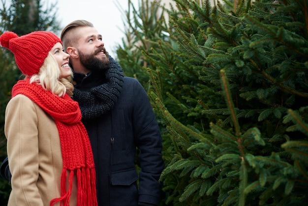 커플은 완벽한 크리스마스 트리를 선택 무료 사진
