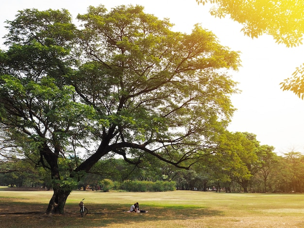 Couple having picnic under the big tree Premium Photo
