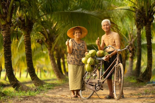 Couple of old age man and woman collecting coconut in coconut farm in thailand. Premium Photo