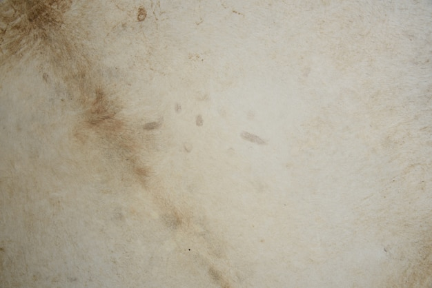 Cow skin white wall Premium Photo