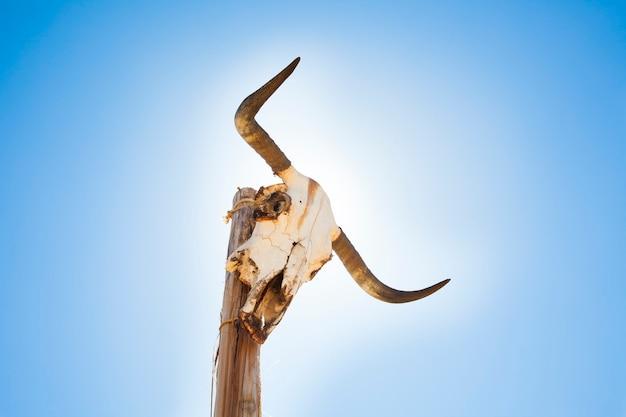 投稿の牛の頭蓋骨 Premium写真