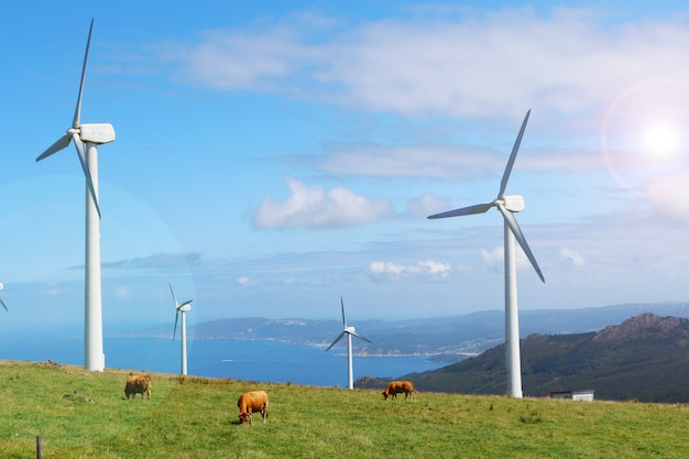 Cows grazing in green mountains between wind turbines of cape ortegal, galicia, spain Premium Photo