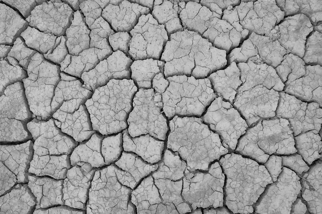 Crack soil on dry season, global worming effect. Premium Photo