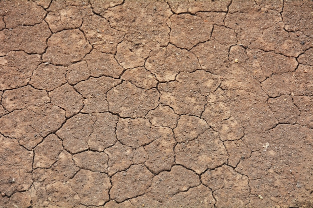 Crack soil texture in summer. from global climate Premium Photo