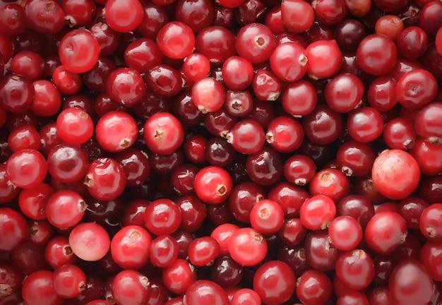 Cranberries horizontal background Premium Photo