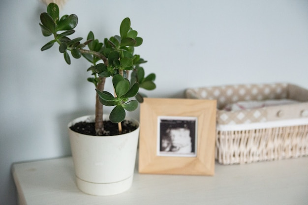Crassula flower in the nursery with a wooden frame light and eco minimalism concept Premium Photo