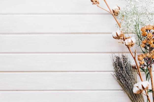 Creative botanical background with space on left Free Photo