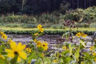 Creek, nature Free Photo