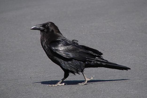 Scary Bird Flyi...