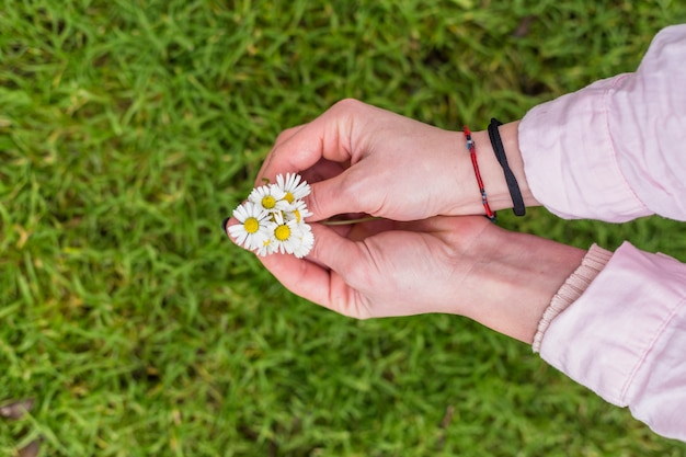 Crop female hands with colorful daisies Free Photo