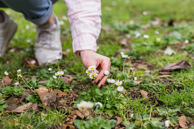 Crop girl picking flowers on meadow Free Photo