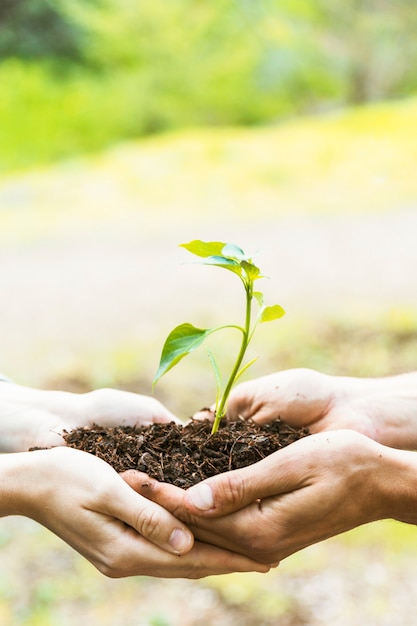 Crop hands with soil and sprout Free Photo