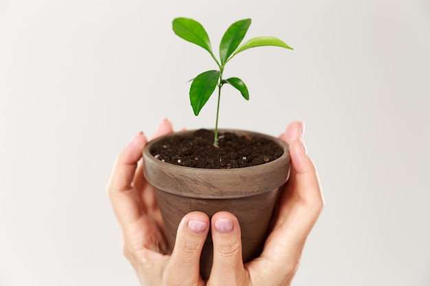 Cropped photo of womans hands holding brown pot with young plant Free Photo