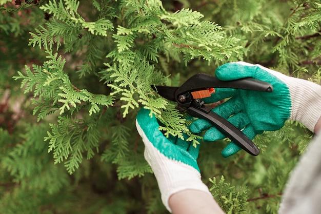 Vista ritagliata del lavoratore di giardinaggio che indossa guanti protettivi durante il taglio delle piante Foto Gratuite