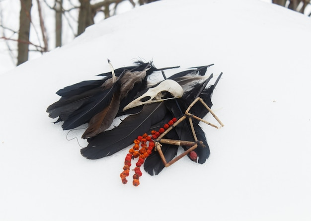 Crow feathers, bird skull and rowan beads in the snow. Premium Photo