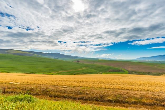 Культивируемые поля и фермы с живописным небом, ландшафтное земледелие. южная африка, зерновые культуры. Premium Фотографии