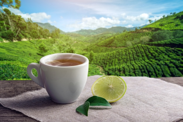 Cup of hot brown tea with a piece of lemon on the background of plantations. Premium Photo