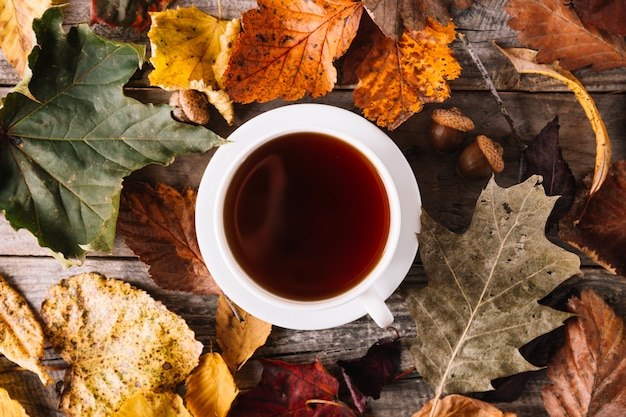 Cup of tea in autumnal decor Free Photo