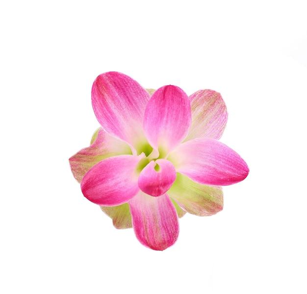 Curcumassesilis花は白い背景に分離します。 Premium写真
