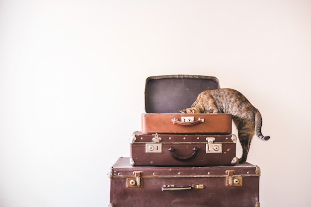 Curious cat sits on vintage suitcases against the backdrop of a light wall. rustic retro style Premium Photo