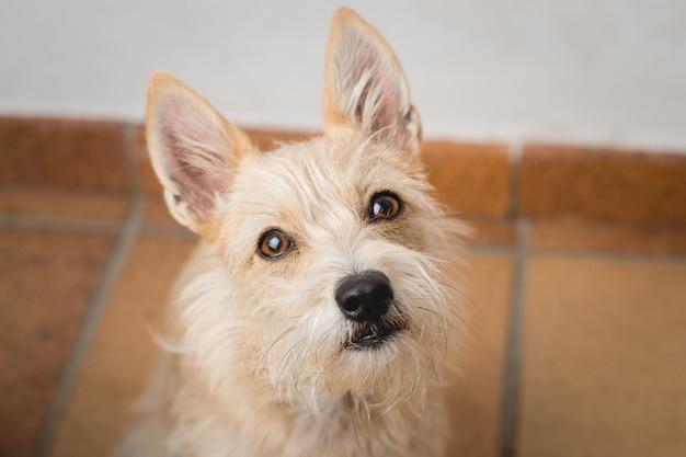 Curious dog looking at the camera Premium Photo