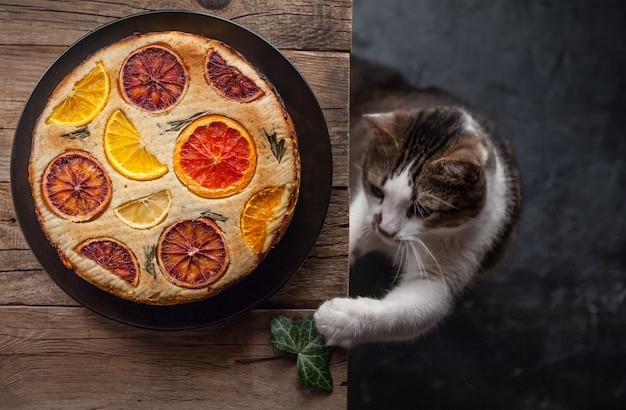 Curious playful cat near citrus pies in rustic style Premium Photo