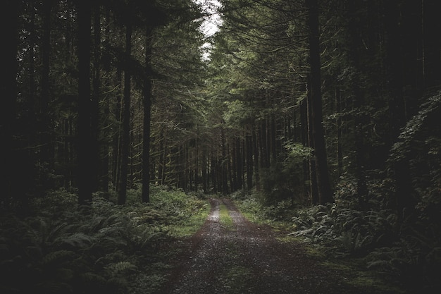 Curvy narrow muddy road in a dark forest surrounded by greenery and a little light coming from above Free Photo