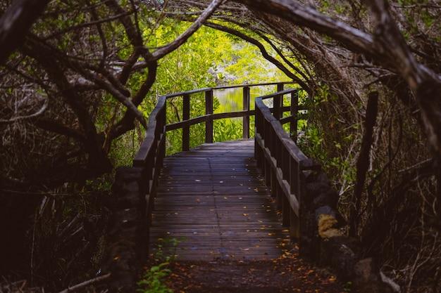 真ん中の木の曲がりくねった木製の経路と距離の水 無料写真