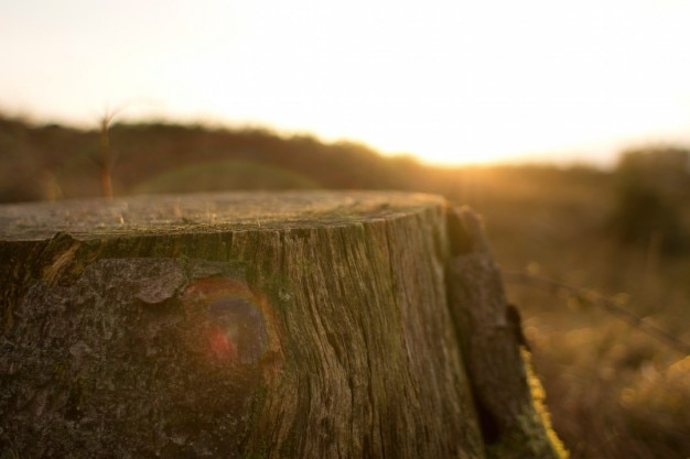 Cut tree trunk Free Photo